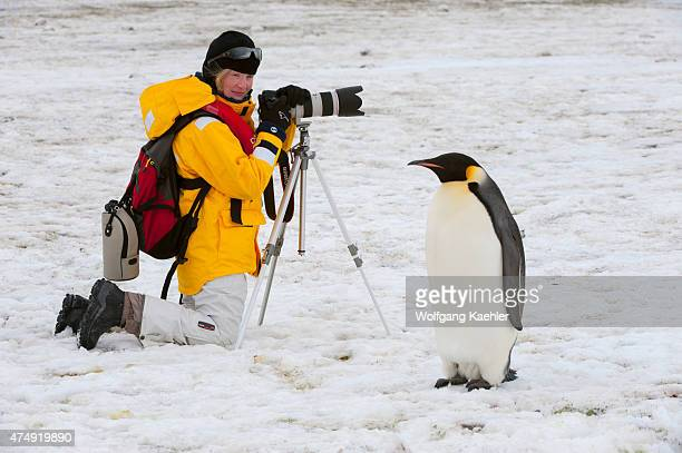 A tourist is photographing Emperor penguins on the sea ice at the Snow Hill Island colony in the Weddell Sea in Antarctica