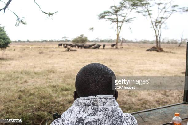 A tourist is seen watching buffaloes at Lake Nakuru National Park during this year's World Wildlife Day celebrations at Lake Nakuru National Park The...