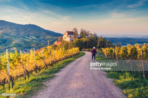 tourist looking at staufenberg castle at sunset, black forest, germany. - baden württemberg stock photos and pictures