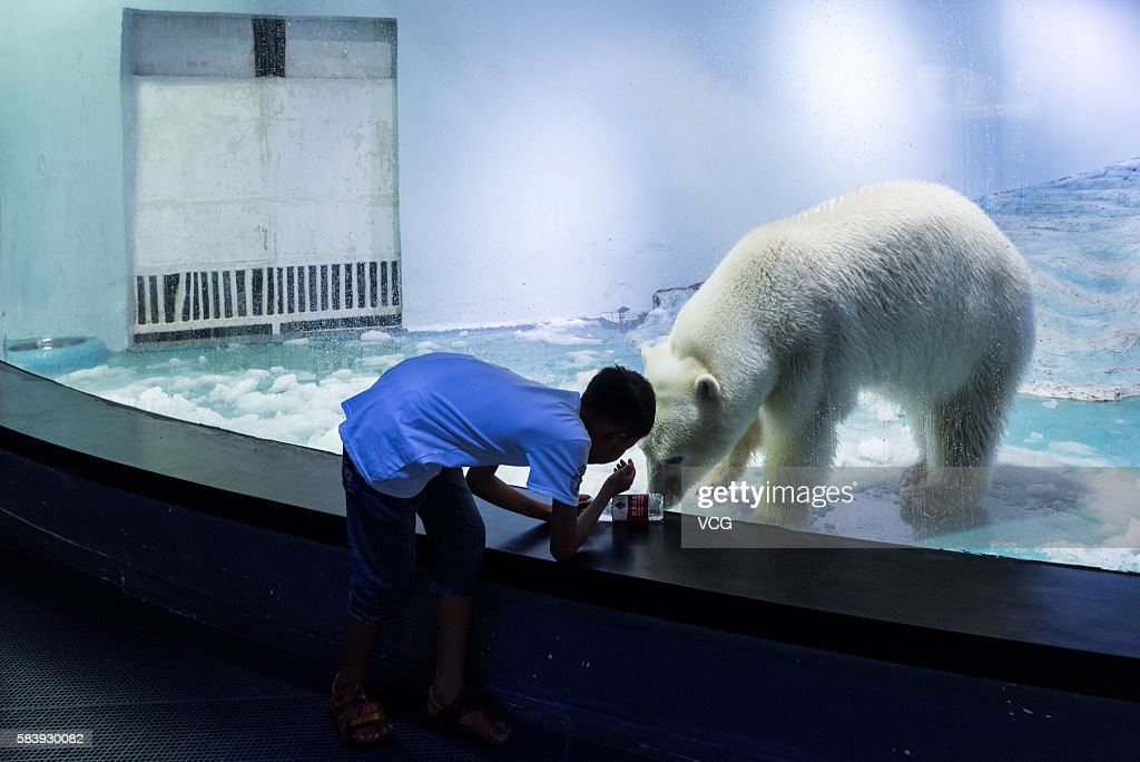 A tourist looks at polar bear 'Pizza' at an aquarium in Grandview shopping mall on July 27, 2016 in Guangzhou, China. 'Pizza' is the only live polar bear in south China's Guangzhou.