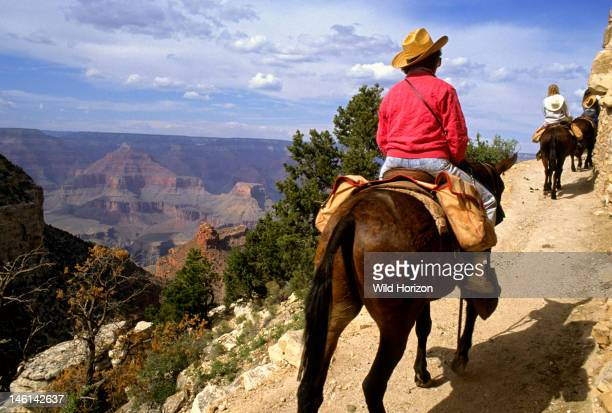 Tourist mule ride into Grand Canyon National Park Bright Angel Trail South Rim Grand Canyon National Park Arizona USA No Model Release