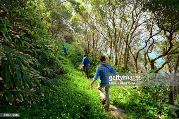 tourist on a hiking trails on flores island - azores fotografías e imágenes de stock