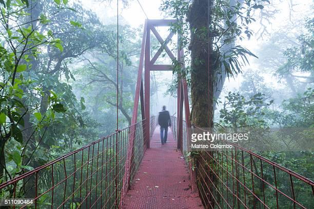 Tourist on a suspended bridge, Monteverde Cloud Forest, Costa Rica