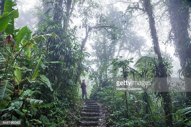 tourist on a track in the monteverde cloud forest, costa rica - costa rica fotografías e imágenes de stock