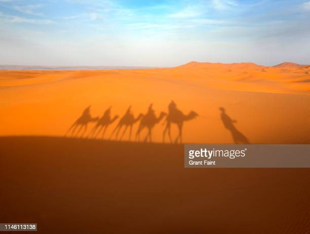 tourist on camels shadow. - bedouin stock pictures, royalty-free photos & images