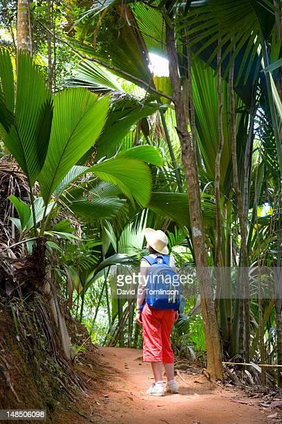 Tourist on rainforest trail.