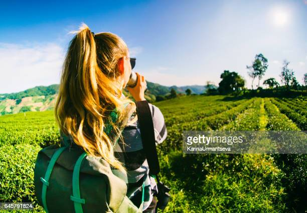 tourist on the tea plantations - plantation stock pictures, royalty-free photos & images