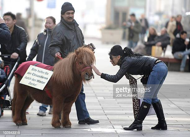 A tourist pets 14 years old circus pony Texas helping his owners to collect some cash to survive through winter at Vienna's most elegant shopping...