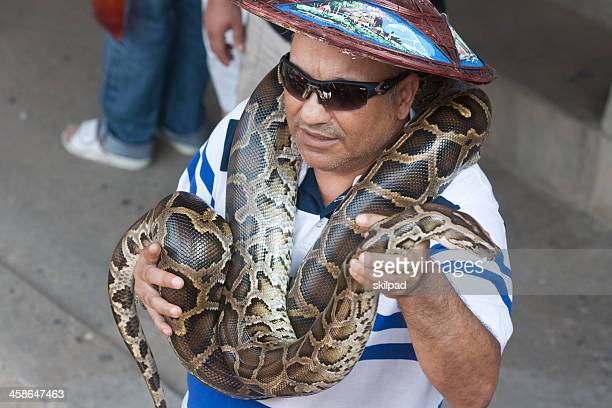 tourist poses with python - burmese python stock pictures, royalty-free photos & images