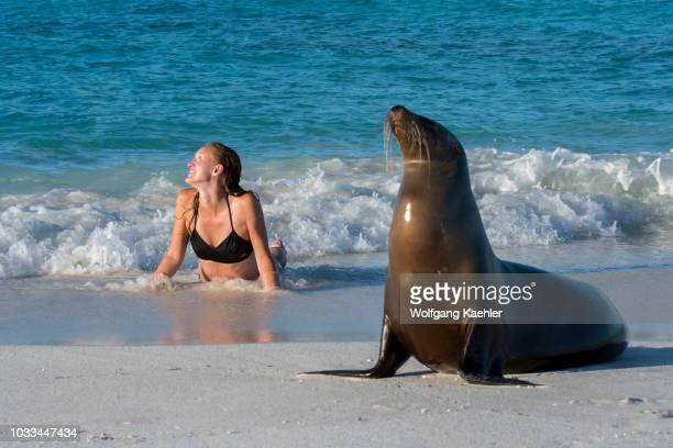 Tourist posing with a Galapagos sea lion on a beach at Gardner Bay on Hood Island in the Galapagos National Park Galapagos Islands Ecuador