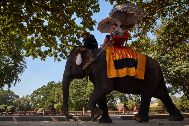 Tourist riding an Asian elephant guided by a mahout at Ayutthaya, Thailand.
