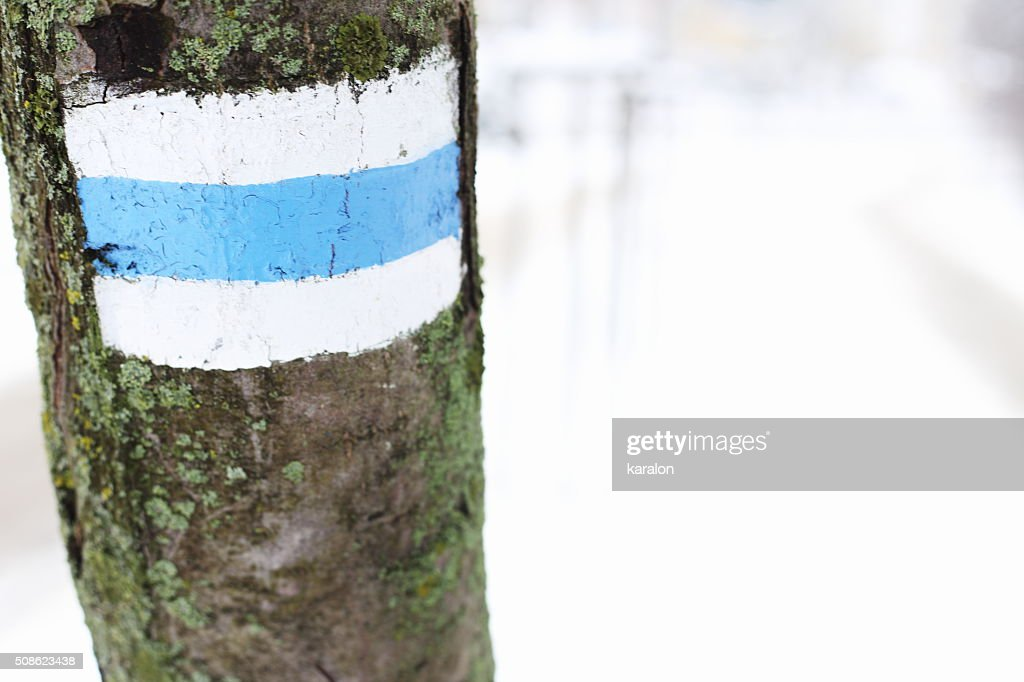 Tourist road sign on tree : Stock Photo