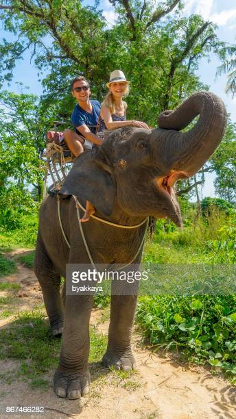 Tourist safari elephant trekking