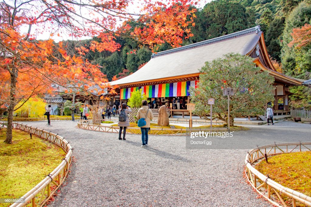 Tourist sightseeing Maple Tree at Nison-in Temple in Autumn, Japan : Stock-Foto