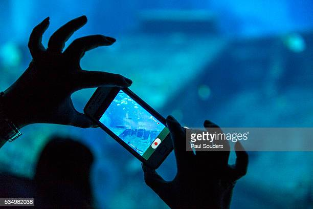tourist snapshots at s.e.a. aquarium, singapore - apple computers stock pictures, royalty-free photos & images