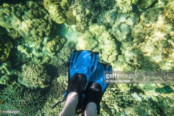 Tourist snorkeling among the corals, Thailand