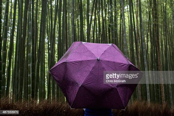 A tourist takes a photograph in the rain at the famous Sagano Bamboo Forest on September 6 2015 in Kyoto Japan The famous city of Kyoto is going...