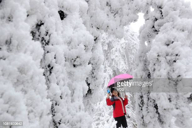 A tourist takes selfies among trees with rime at Qianjiang National Forest Park on December 12 2018 in Chongqing China
