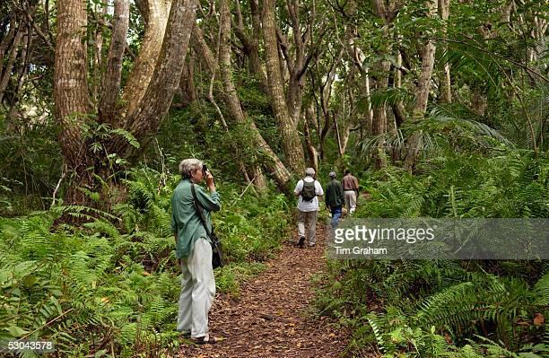 Tourist taking photographs in Jozani forest Zanzibar