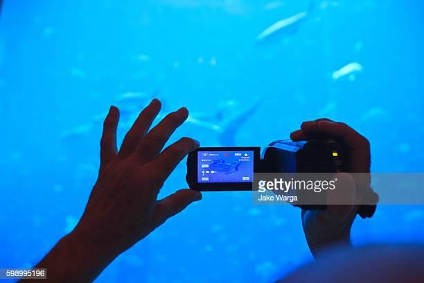 tourist videotaping aquarium - jake warga stock pictures, royalty-free photos & images