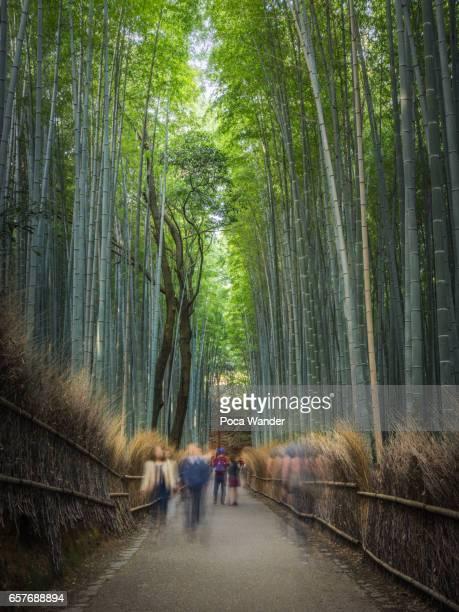 Tourist walk in bamboo grove