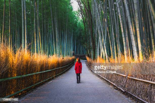 tourist walking in arashiyama bamboo grove, kyoto, japan - grove_(nature) stock pictures, royalty-free photos & images