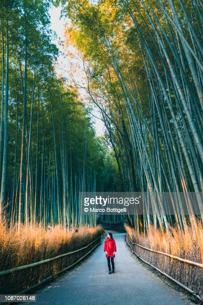 tourist walking in arashiyama bamboo grove, kyoto, japan - arashiyama stock pictures, royalty-free photos & images