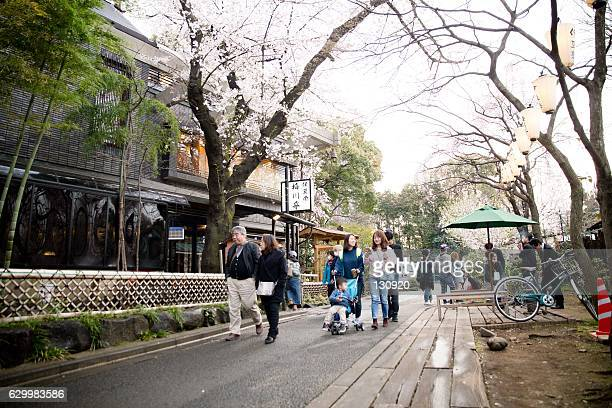 tourist walking under the sakura trees - ueno park - under tongue stock photos and pictures