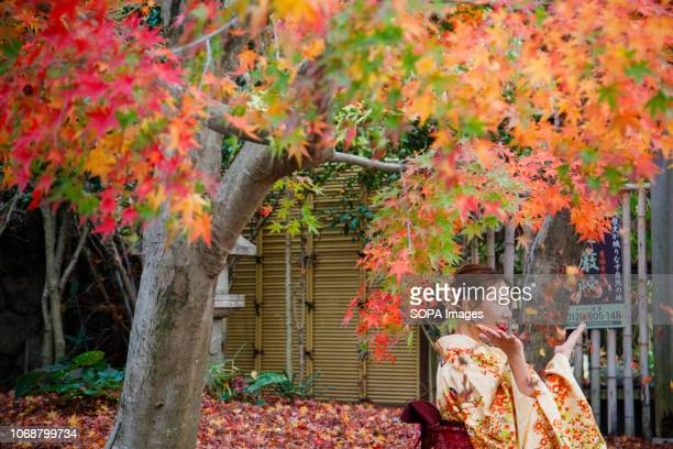 A tourist wearing a kimono which is one of the traditional style of Japan seen taking pictures next to trees with autumn leaves during fall season in...