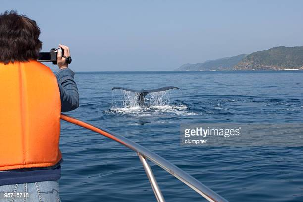 Tourist Whale Watching