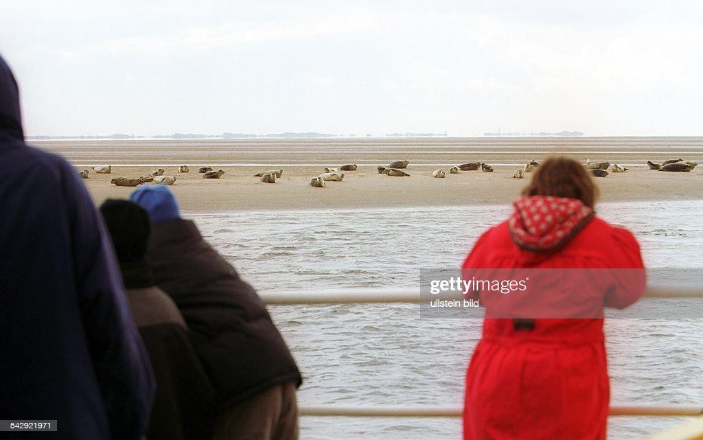 Seehunde auf Sandbank im Wattenmeer Pictures   Getty Images