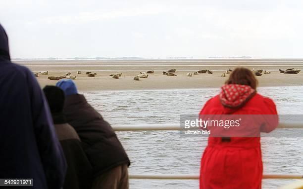 Touristen beobachten vom Boot aus Seehundbänke im Nationalpark Wattenmmeer Seehunde Robben Sandbank Naturschutzgebiet Nordsee Urlauber