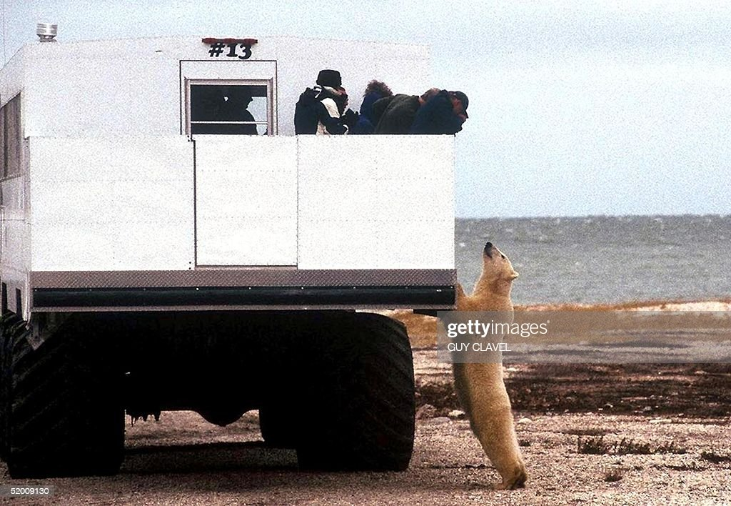 """Tourists aboard a special """"tundra buggy"""" view a po : News Photo"""