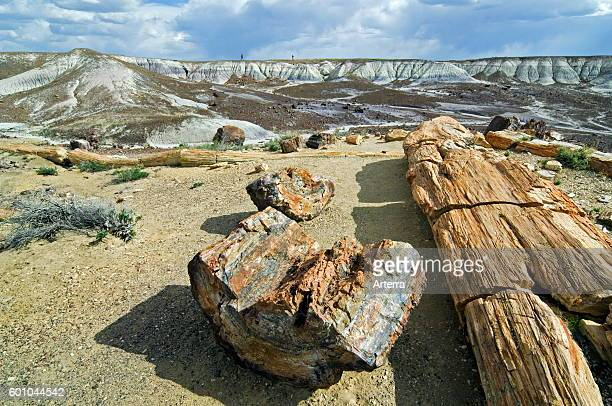 Tourists and petrified logs exposed by erosion Painted Desert and Petrified Forest National Park Arizona USA
