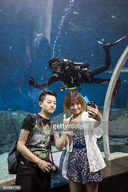 Tourists and Scuba Diver at S.E.A. Aquarium, Singapore