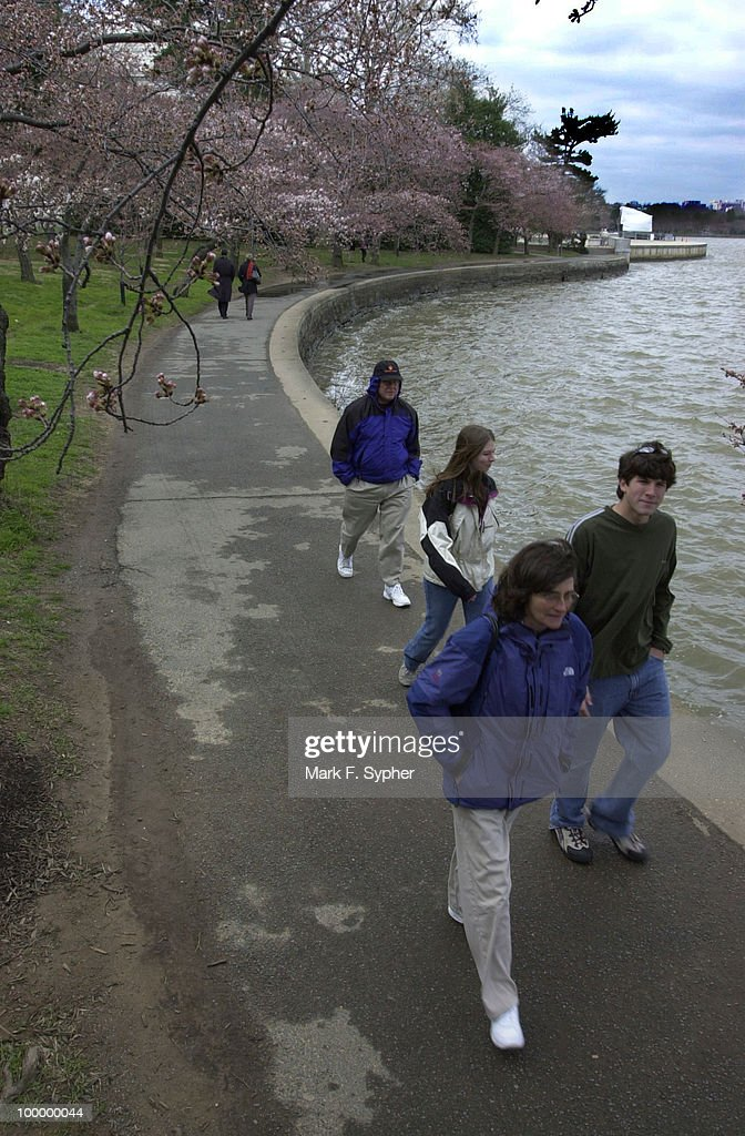 Tourists are becoming more active in the tidal basin now that cherry blossoms are begining to appear on the cherry trees on the south side of the Mall on Wednesday. This weekend should provide a peak viewing time for the cherry trees, which were gifts from China.