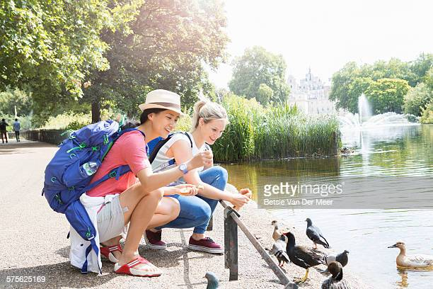tourists are feeding birds near park pond - feeding stock pictures, royalty-free photos & images