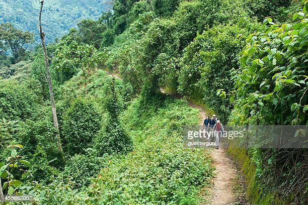 los turistas s'excursionismo a través de un bosque nuboso tropical, ruanda - ruanda fotografías e imágenes de stock