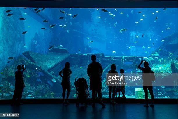 Tourists at S.E.A. Aquarium, Singapore