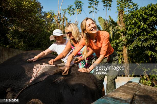 tourists cleaning indian elephants - wildlife reserve stock pictures, royalty-free photos & images