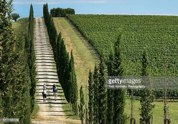 Tourists climbing hill in vineyard, Chianti, Tuscany, Italy.