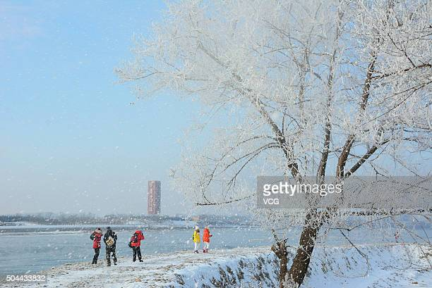 Tourists come to look at the rime scenery on an island along the Songhua River on January 10 2016 in Jilin City Jilin Province of China The first...