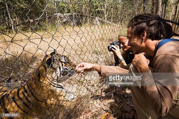 Tourists communicating with captive rescued tiger (Panthera tigris) at Phnom Tamao Wildlife Sanctuary near Phnom Penh.