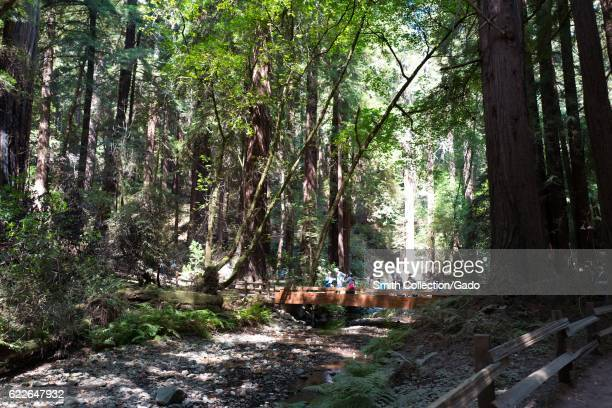 Tourists cross a bridge which spans a small stream at Muir Woods National Monument Mill Valley California September 5 2016