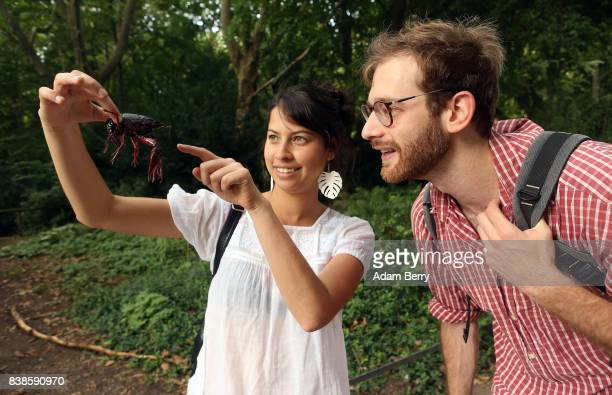 Tourists Estefania Piedrahita and Matt Shapiro look at a Louisiana crawfish or Procambarus clarkii in the Tiergarten park on August 24 2017 in Berlin...