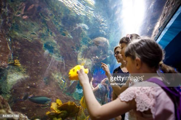 Touristes explorant la vie marine dans aquarium