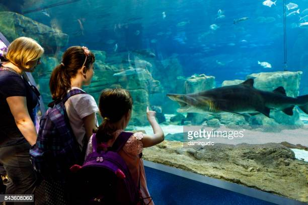Tourists exploring sea life in aquarium