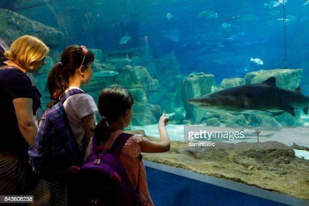 Tourists exploring sea life in aquarium