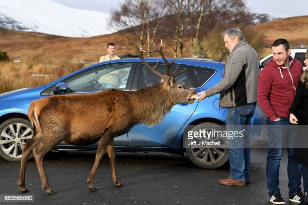 Tourists feed a red dear stag visiting a car park near Glen Coe on December 1 2017 in Glen CoeScotland On the first day of the meteorological...