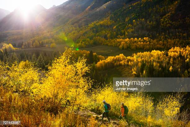 tourists hiking in mountain scenery - aspen tree stock pictures, royalty-free photos & images